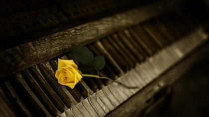 Yellow rose on a piano